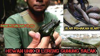 Download BEBERAPA SATWA ANEH DARI LERENG GUNUNG SALAK Video