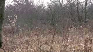Download Big Ohio Buck From A Ground Blind Video