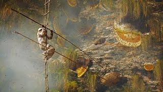 Download Honey Hunters Video