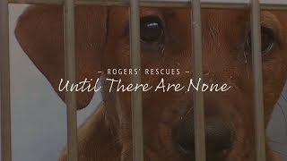 Download Until There Are None | Dog Rescue Documentary Video