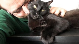 Download The Sweetest Black Cat in the World Video