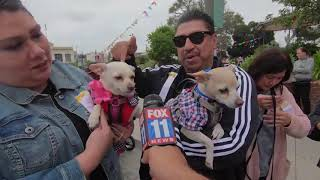 Download Annual 'Blessing of the Animals' in L.A. a big hit with community Video
