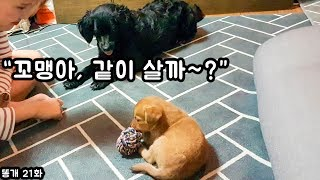 Download 버려졌던 아기강아지를 보살펴주는 강아지 (감동.. 깜봉아 동생할까?ㅋㅋ ) Video