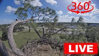 Download Southwest Florida Eagle Cam - 360 Video