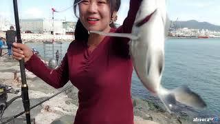 Download 바다낚시 부산 영도 카고낚시 숭어대박포인트 갑니다!! 감성돔은 덤으로 올라옵니다 (사람 정말 많아요;;;) - Sea Fishing Video
