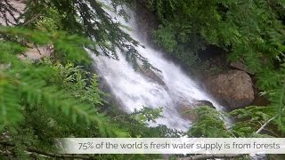 Download How Trees Help Create the Fresh Water Supply Video
