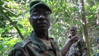 Download Forest Elephants in CAR Threatened by Poachers, Rebels Video