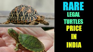 Download Price of turtles in india भारत में कछुओं की कीमत price of aquarium turtles in india Flora And Fauna Video
