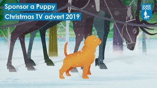 Download Guide Dogs - Henry | Sponsor a Puppy | Christmas 2019 TV advert | Accessible version Video