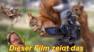 Download Eichhörnchen Mutter zieht ihre 4 Jungen groß, direkt vor und auf unserem Hamburger Balkon. Video