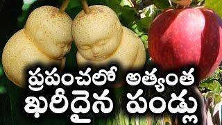 Download ప్రపంచలో అత్యంత ఖరీదైన పండ్లు || World's Top 10 Most Expensive Fruits || T Talks Video