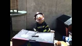 Download The great puppet show Video