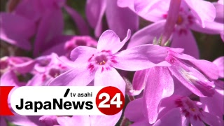 Download JapaNews24 ~ 海外へ日本のニュースをLIVE配信 Video