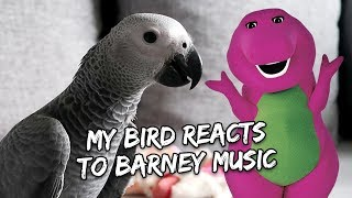 Download My Bird Reacts to Barney | Vlog #259 Video