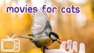 Download Movies for Cats - Entrancing Forest Birds. Video