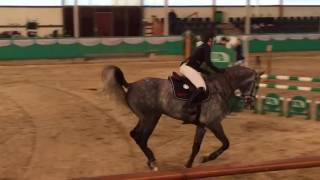 Download Alaba Sieg Springpferde L Gahlen 2017 Video