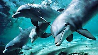 Download Песни дельфинов о Любви Video