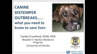 Download Everything Shelters Need to Know About Canine Distemper - webcast Video
