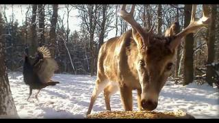 Download Deer Trail Pictures From (12-17-16) Video