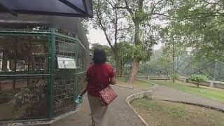 Download VR180 3D 4K 50FPS Jalan-2 ke Taman Burung di TMII Jakarta | A Trip to Aviary Park at TMII Jakarta Video