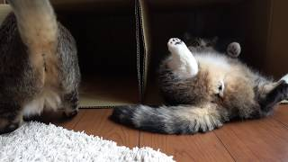 Download まるとはな24。-Maru&Hana 24.- Video