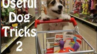 Download Useful Dog Tricks 2 performed by Jesse the Jack Russell Terrier Video