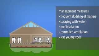 Download Animation ″Ammonia emissions and dairy farming″ Video