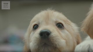 Download CUTE! Puppy Guide Dog Training | Earth Unplugged Video