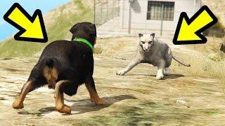 Download GTA 5 - Chop vs. Mountain Lion! (Who Survives?) Video