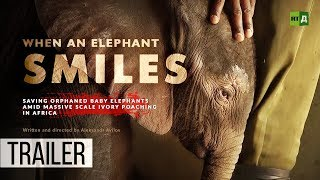 Download When an Elephant Smiles. Saving baby elephants orphaned by huge ivory poaching in Africa (Trailer) Video
