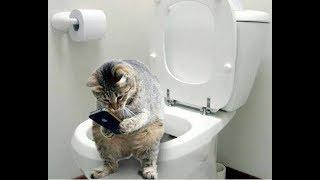 Download Обалденно смешные кошки! Подборка приколов с котами и кошками Video