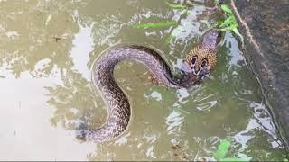 Download Kerala floods Konkani song by samson Video