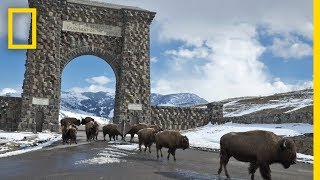 Download Six Photographers Reveal Yellowstone Like You've Never Seen It | Exposure Video
