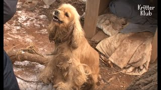 Download Aggressive Dog Is Afraid Of Losing Her Puppies Again | Kritter Klub Video