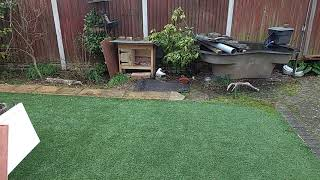 Download [Life] - My Nan's Pigeon. Video