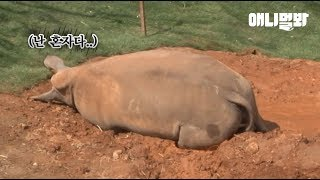 Download 좀 힘든 일이 있어서요 이 친구 등 한 번씩만 토닥여주고 가세요 l Rhino Gets Bullied Because He's From Different City Video
