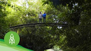 Download This Couple Nursed a Rainforest Back to Life Video