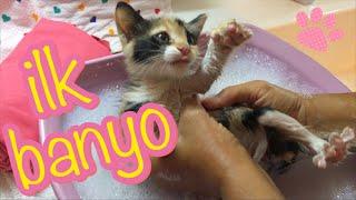 Download Yavru kedi yıkanmaz! / Çok mecbur kalmadıkça Video