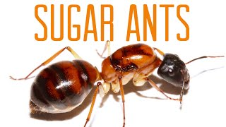 Download Sugar Ants - (Part 1) Video