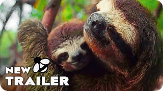 Download Earth - One Amazing Day Trailer (2017) Nature Documentary Movie Video