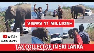 Download Poor Elephant Video