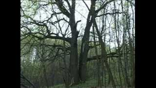 Download ЗОЛОТО БАНДЫ ФОМИНА Video