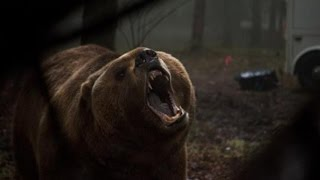 Download Grizzly Trailer 2014 HD Billy Bob Thornton James Marsden Piper Perabo Video