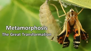 Download Metamorphosis - The Great Transformation Video