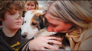 Download Dog Meets Owner Soldier After a Long Time 🐶🐶Dog Meets Owner (Full) [Funny Pets] Video