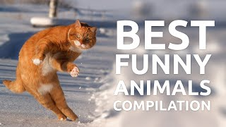 Download Best funny animals compilation by Failzone Video