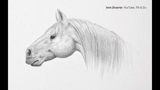 Download Cómo dibujar una cabeza de caballo - Paso a paso - Fácil Video