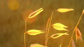 Download Relaxing Instrumental Music: soft, studying, work, think music - relaxdaily N°074 Video