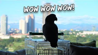Download My Parrot Learned to Talk Like a Human | Vlog #317 Video