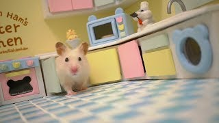 Download Tiny Hamster in his Tiny Kitchen II Video